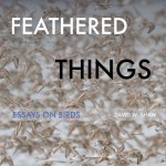 Just Launched! – Feathered Things