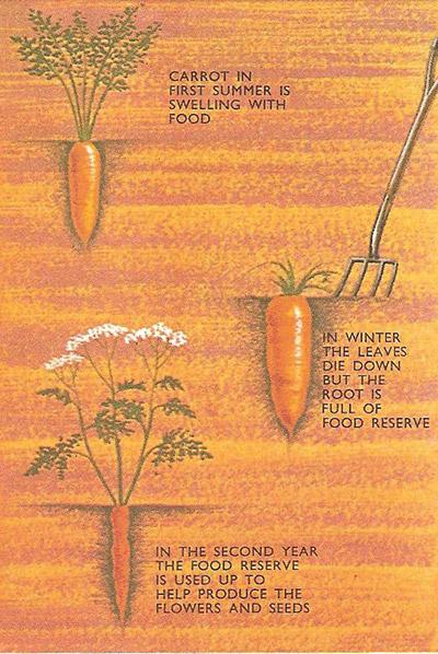 food storage in plants
