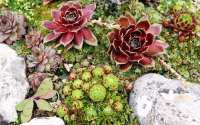 How to: build and plant an alpine rock garden - David Domoney