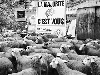 Elettori pecore