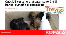 bufala-cuccioli-cassonetto-gazzettino-treviso