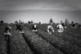 Yolo County Board Of Supervisors to Consider Task Force on Farm Labor