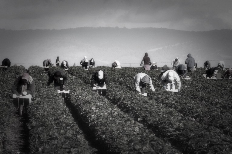 Wolk Casts Decisive Vote to Advance Farm Worker Overtime