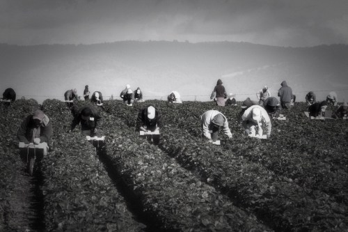 Why We Fasted for Farm Worker Rights
