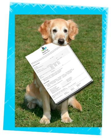 New client forms for Daytime Dogs and Friends Gainesville, Florida