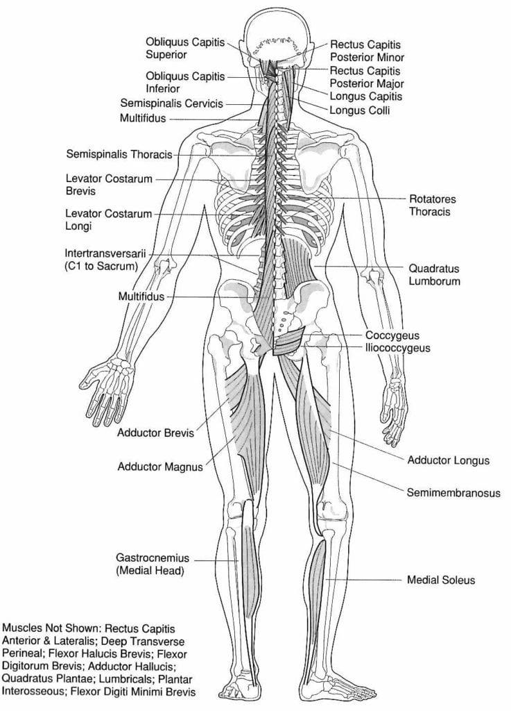 leg pain diagram