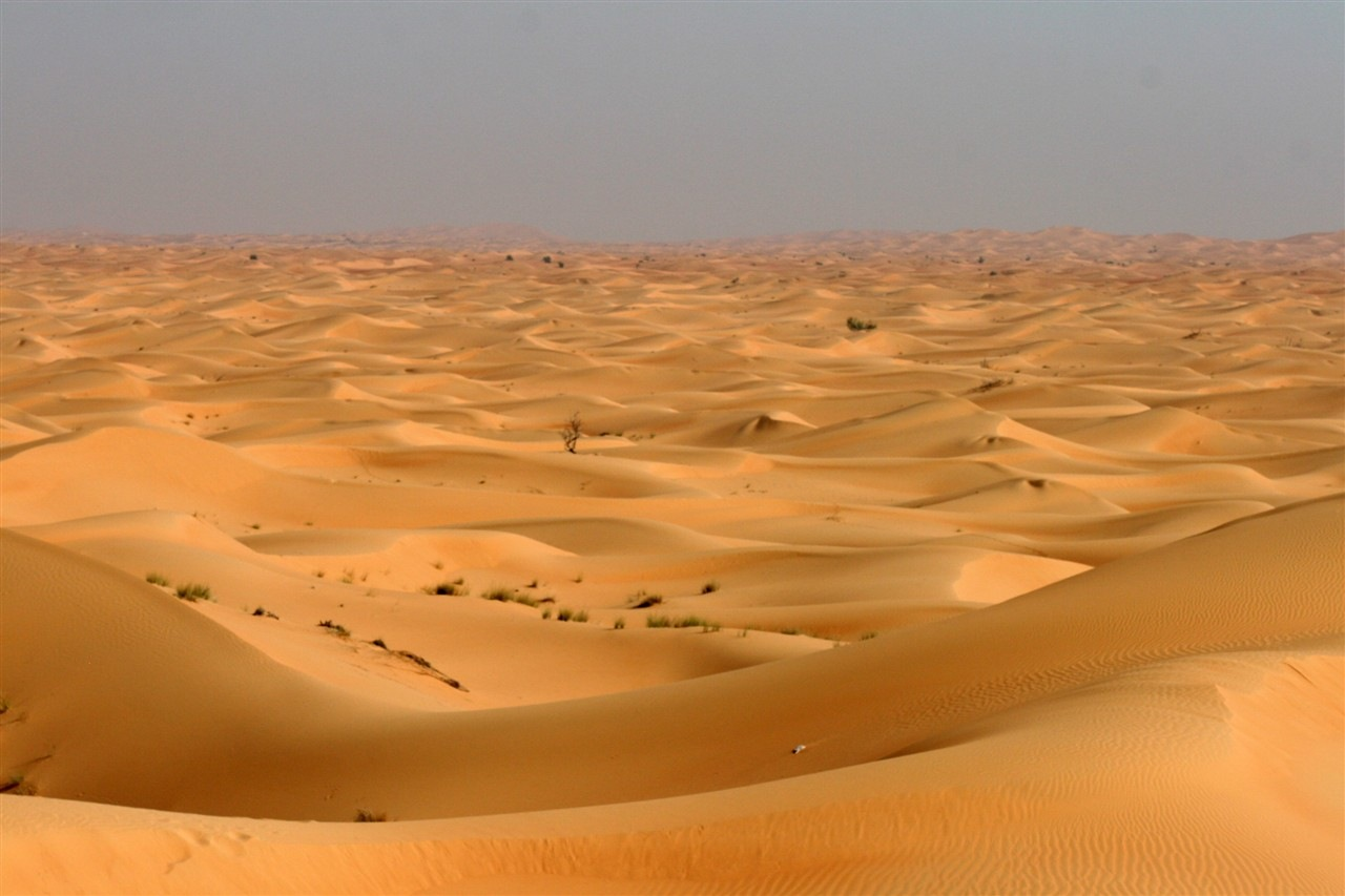 Animals In Suits Wallpaper Dubai Day 4 Sand Dunes Soccer And Suits Dc Rainmaker