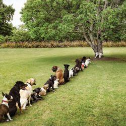 Purina-Bark-in-the-Park-Tree