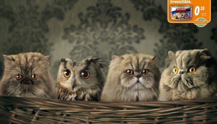 Wannabe-Owl-o