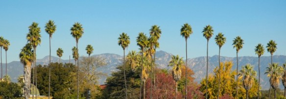 View of palm trees and the San Gabriel mountains in Los Angeles.