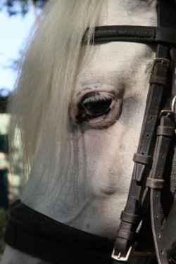 I miss my beloved horse every day. (pet)