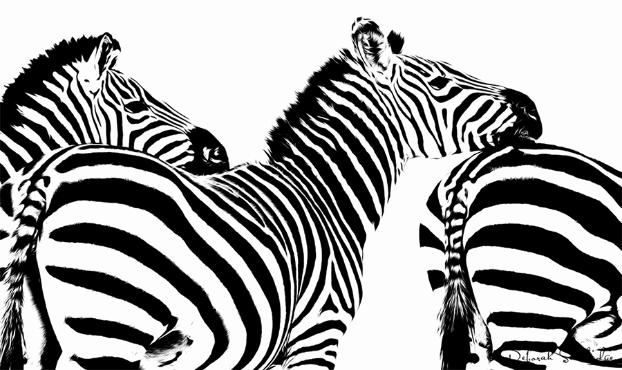 Zebras - Create High Contrast BW Imagery using Threshold