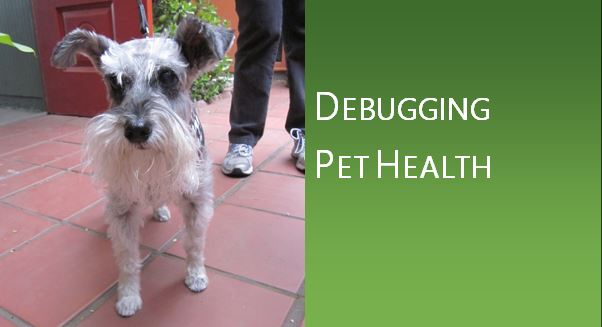 How To Treat Phimosis In Dogs