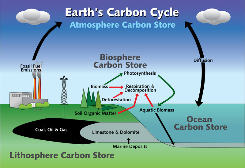 Carbon Cycle Diagram Worksheet - Engineering and Technology