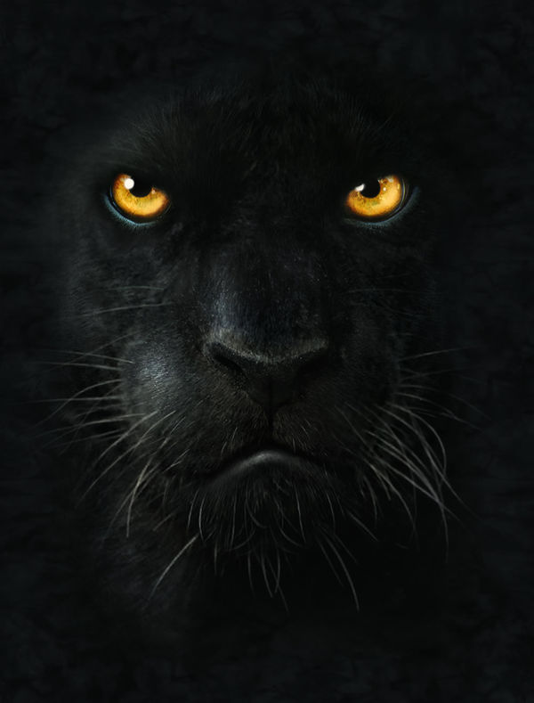 Only Hd Wallpapers Girl Black Panther By The Mountain Decalgirl