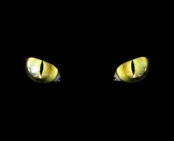 Halloween Black Cat Wallpaper Cat Eyes Decalgirl