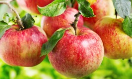 Amazing Apple Desserts for Fall