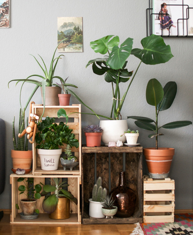 ideas de decoracin con plantas tendencias