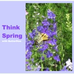 Think Spring With Butterflies From Osborne & Little