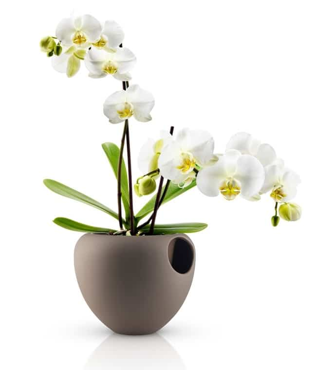 pot orchid e by eva solo gagner sur le blog. Black Bedroom Furniture Sets. Home Design Ideas
