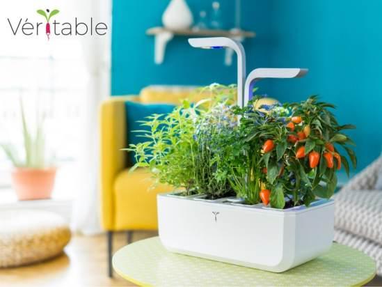 potager d 39 int rieur autonome et intelligent v ritable. Black Bedroom Furniture Sets. Home Design Ideas
