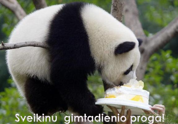 Cute Fat Baby Wallpapers Juokingi Atvirukai Gimtadienio Proga