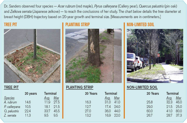 Size Expectations for Urban Trees with Regard to Designed Space