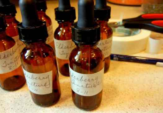 Getting More Self-Sufficient Homemade Elderberry Tincture, Edible Landscape.com, Adams, Johns, sambucus ssp., research studies, self-sufficiency, homemade, homegrown, plant identification, Bulk Herb Store, umbrels, freezing berries, 80 proof vodka or brandy, preserving, amber bottles, cold and flu remedy, Pliny the Elder, Hippocrates, Genesis 1:29
