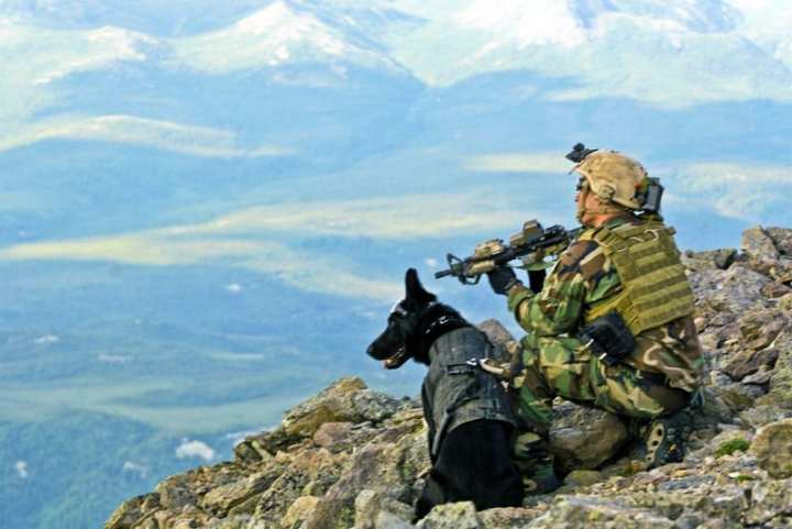 SEAL Military Working Dog