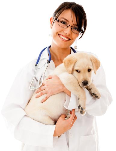 veterinarian job description wtfhyd - veterinarian job description