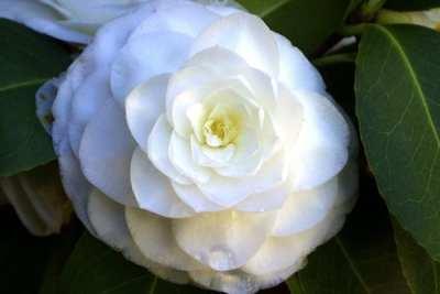 Los productos naturales que realzan tu belleza