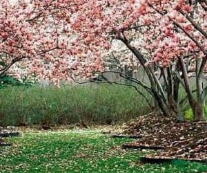 primavera_0
