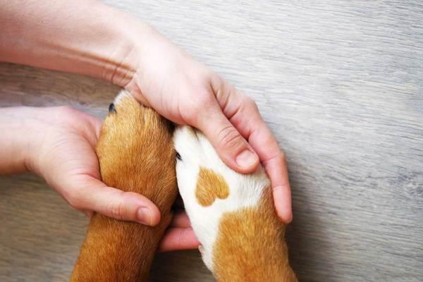 Sommerkurs in der Hundeschule Hürm
