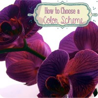 How to Choose a Color Scheme
