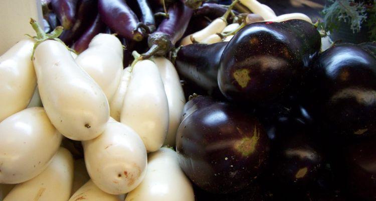 Eggplant_Demagaga