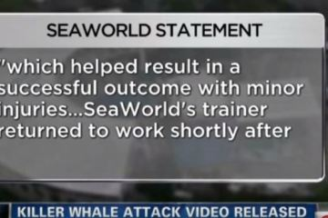 Sea World killer whale attack video