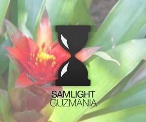 Samlight - Guzmania