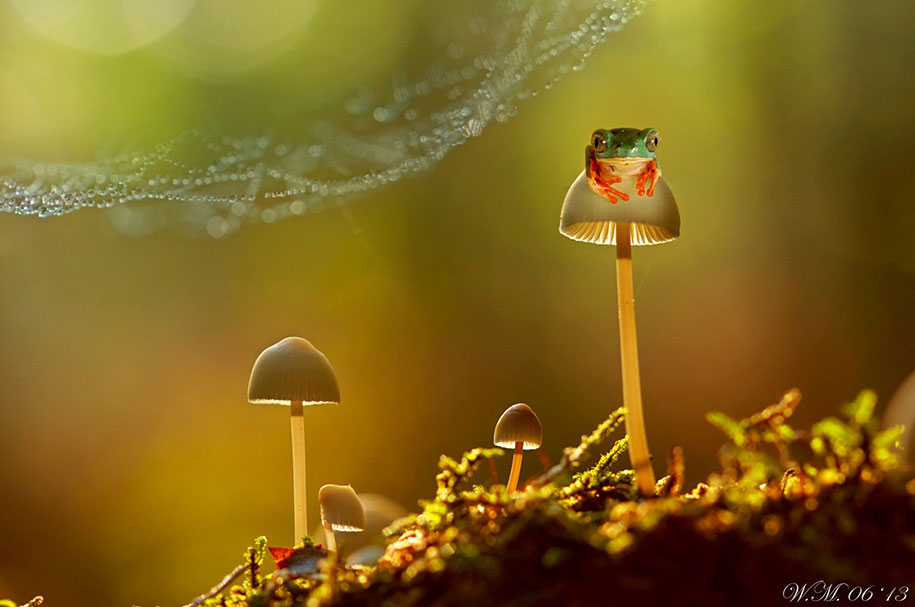 Ring Ceremony Hd Wallpaper The Spellbinding World Of Frogs In Macro Photography By