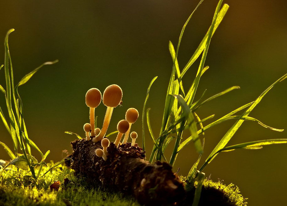 Aliens Cute Wallpaper Ordinary Mushrooms In A Magical World By Vyacheslav Mishchenko
