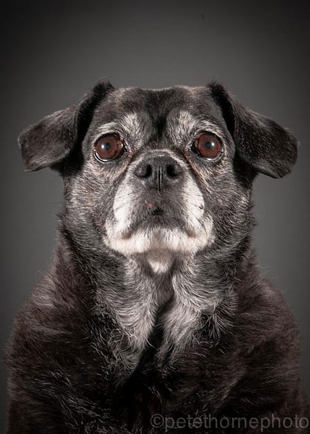 Cute Baby Face Wallpaper Photographer Takes Heartbreaking Portraits Of Really Old Dogs