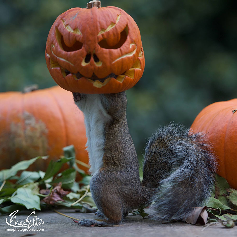 Scary Little Girl Wallpaper Squirrel Becomes A Halloween Monster As It Tries To Steal