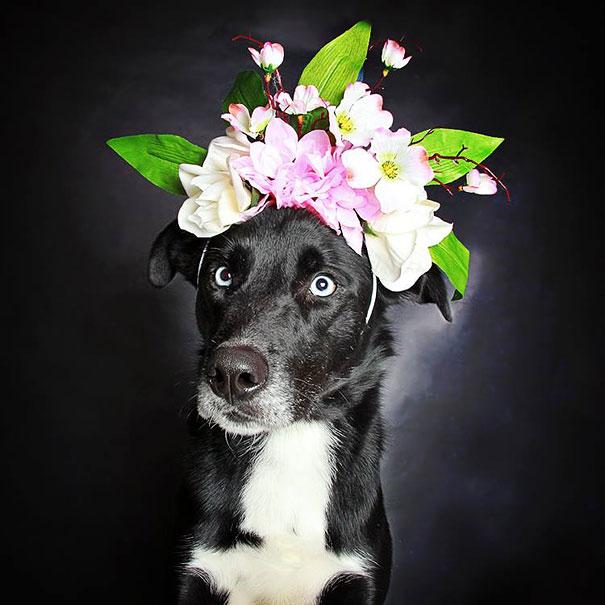 Pitbulls Fall Wallpaper Photographer Uses Flowery Hats To Help Less Popular Black