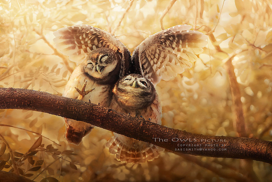 Fall Wallpaper With Owls Owls At Their Cutest In Pictures By Thai Photographer Sasi