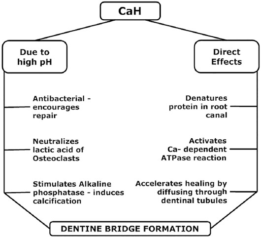 Possible mechanisms of lack of dentin bridge formation in response