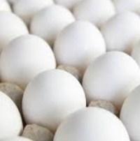 eggs brain growth foods