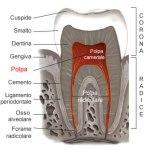 polpa-dentale