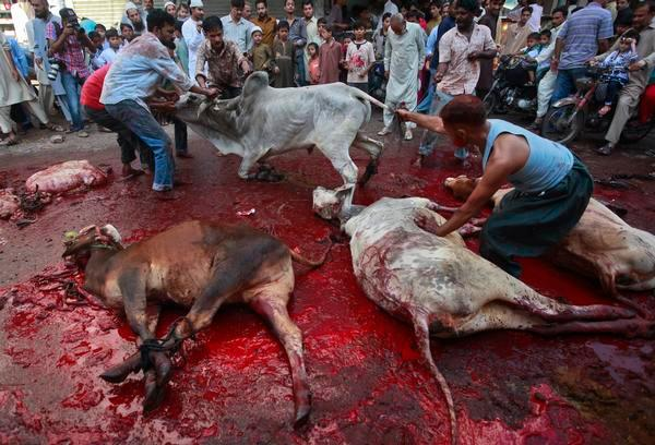 Indian Local Beautiful Girl Wallpaper Spooked Animals Amateur Butchers Result In Injuries On