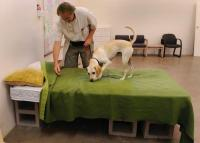 Trained dogs sniff out bed bugs in Colorado  The Denver Post