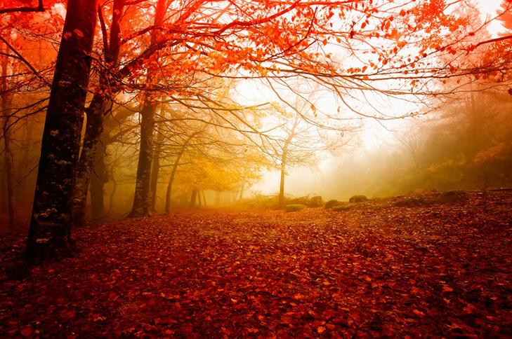 Fall Foliage Computer Wallpaper 25 причин чому осінь краща за літо культурне життя