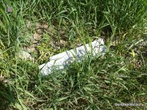 Kunststoffmüll belastet die Donau-Auen in Hainburg - die Umweltstadträtin der SPÖ blieb offensichtlich untätig | Foto: DerGloeckel.eu
